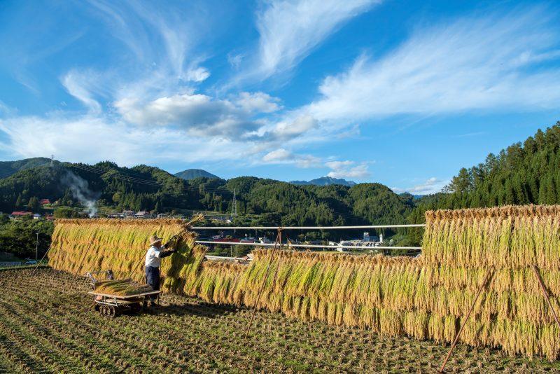フォトコンテスト:収穫の秋