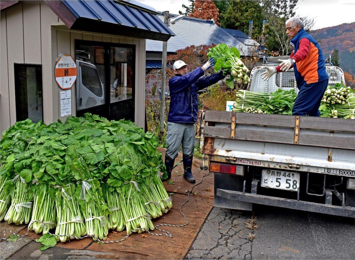 フォトコンテスト:野沢菜の集荷