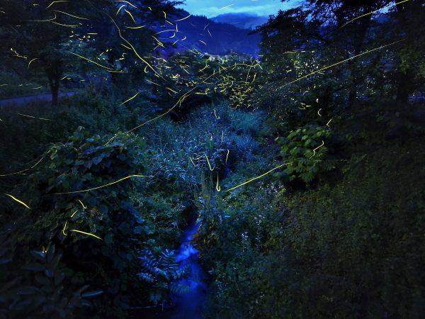 フォトコンテスト:夏夜の燈