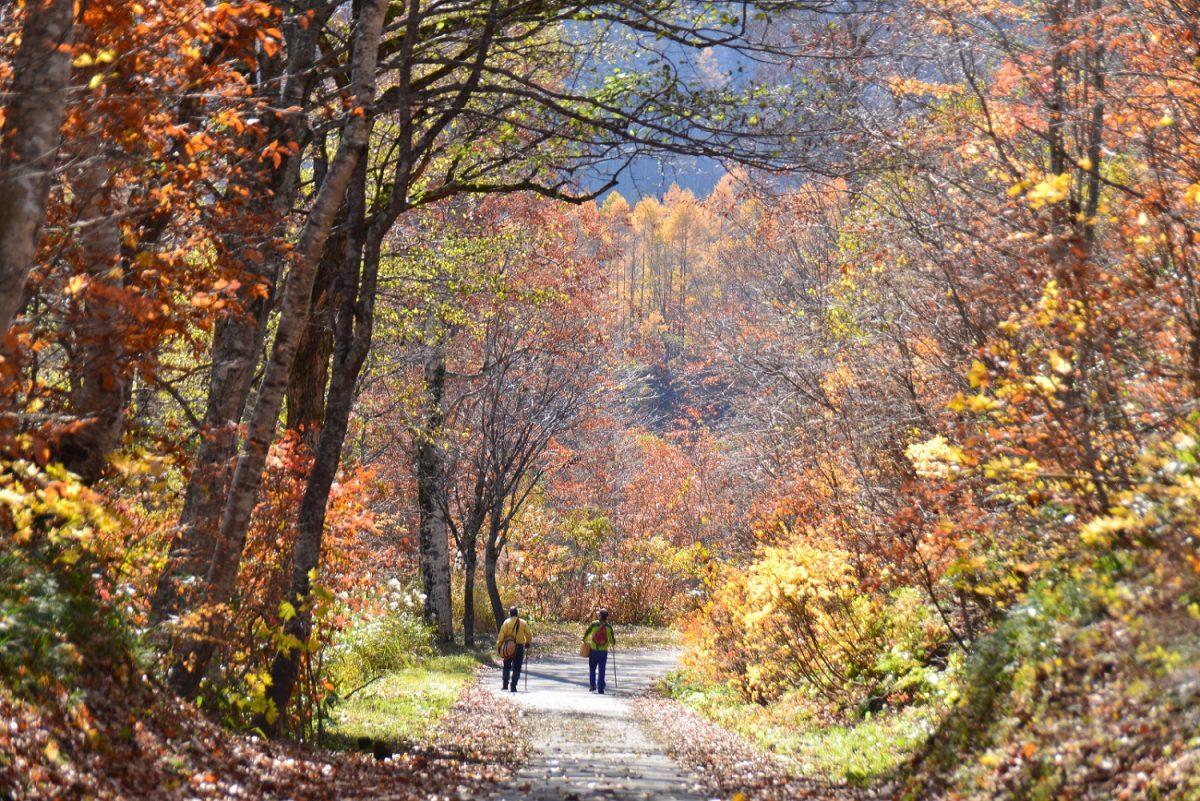 フォトコンテスト:晩秋の山道を歩く
