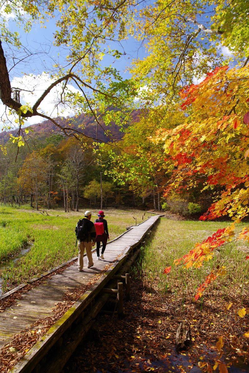 フォトコンテスト:紅葉の木道を行く